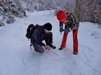 Vlčí hlídky hledají nové dobrovolníky pro monitoring velkých šelem v Beskydech