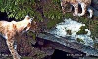 Fotopast – skrytá sonda do života divokých zvířat