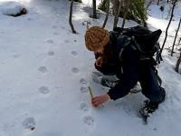 Velké šelmy v Beskydech a Javorníkách lákají nové dobrovolníky